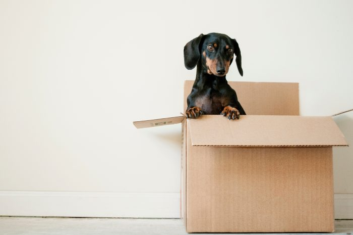 5 Top Tips to make the move out process easier