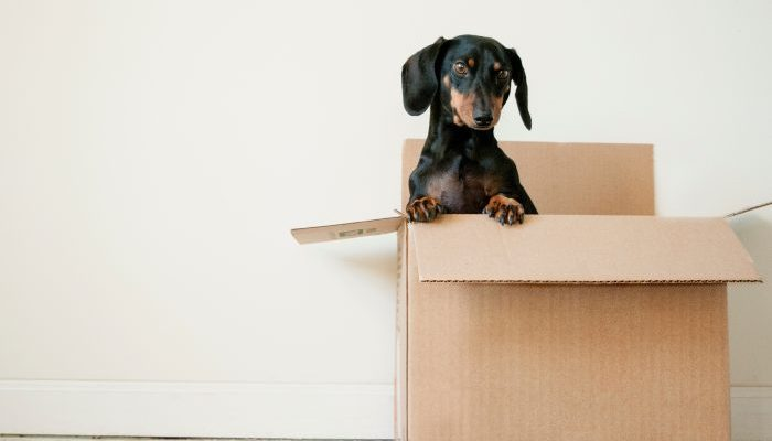3 Easy Steps To Moving