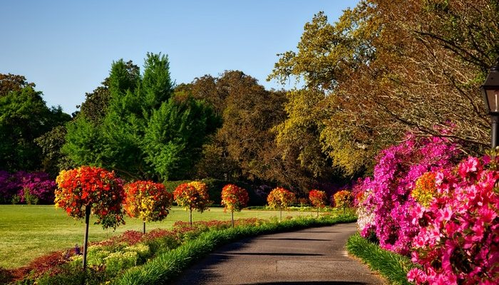 Fall in Love With Your Garden