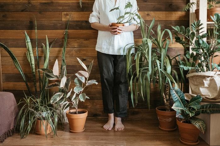 The Benefits Of Having IndoorPlants
