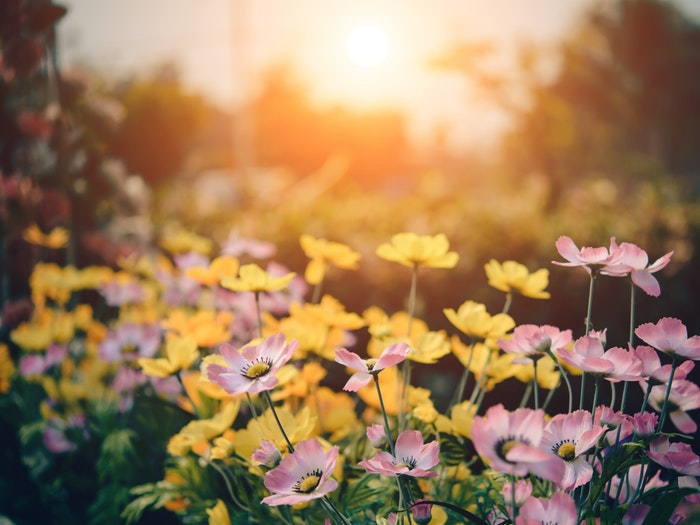 Making Your Garden A Usable Space This Summer