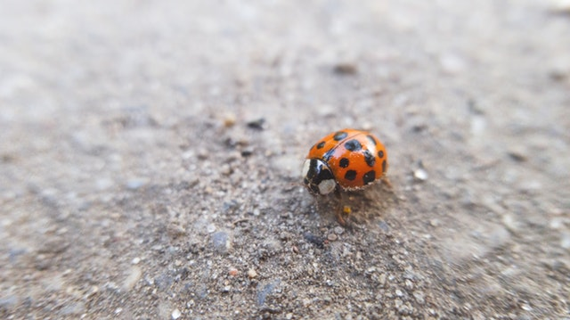 Pests: What Are They And Can You Control Them?